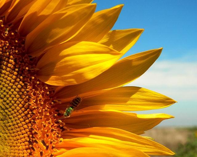 صور ورود , صور ازهار صفراء , ورد اصفر