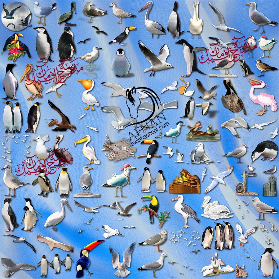 كليب ارت طيور منوعه للفوتوشوب png