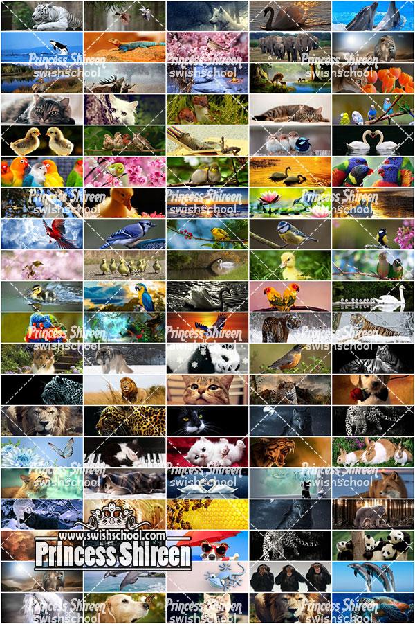 اكبر كولكشن كفرات للفيس بوك الجزء التانى , 100 cover للفيس بوك من تجميع Princess Shireen خاص لمدرسة جرافيك مان