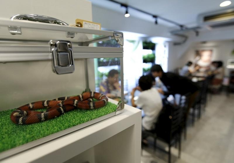للشجعان فقط افتتاح مقهى التعابين في طوكيو بالصور