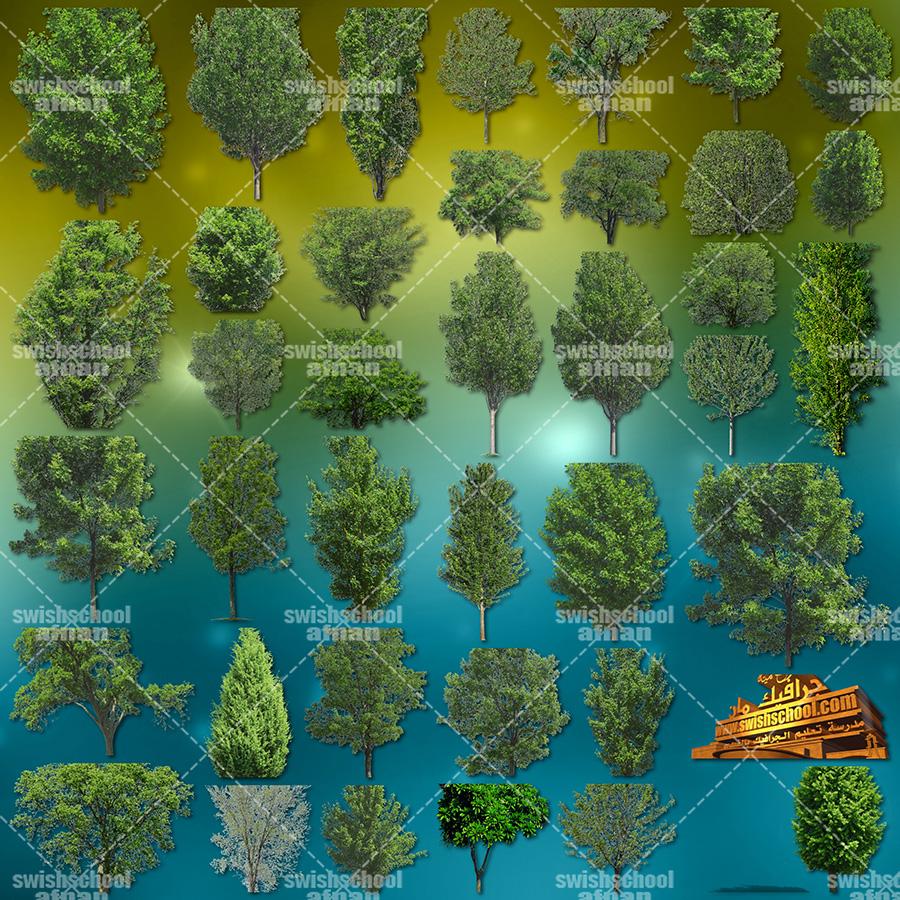 سكرابز شجر , اشجار بدون خلفيه للفوتوشوب png