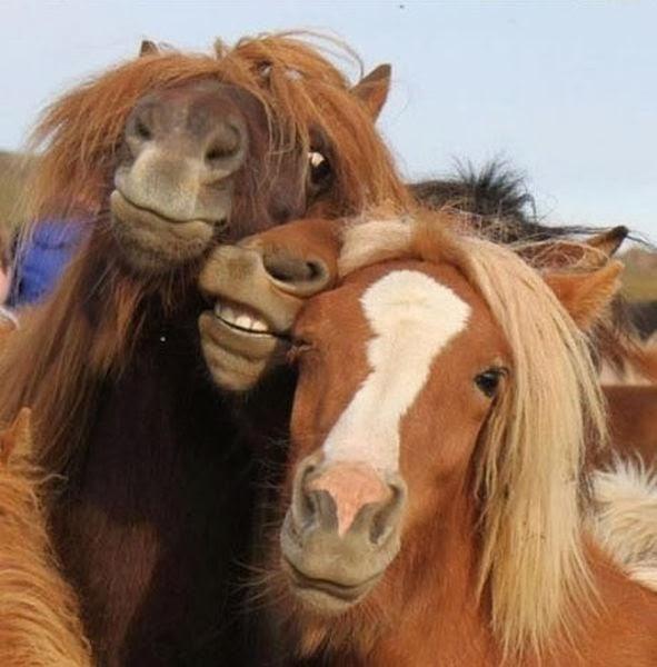 صور حيوانات سيلفي - حصان selfie