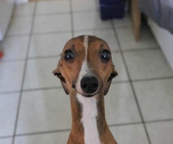 صور حيوانات سيلفي - كلاب selfie