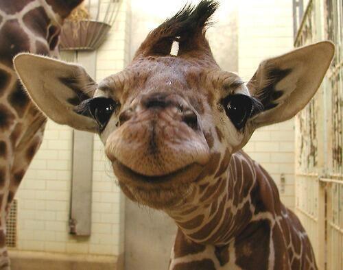 حيوانات بتصور نفسها سيلفي - selfie