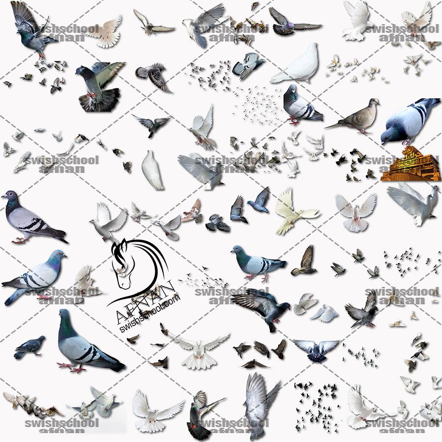 صور مقصوصه يمام ابيض وحمام وطيور في السماء للاستديوهات والفوتوشوب png