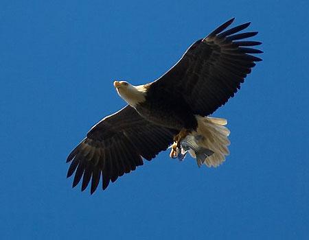 صور طائر النسر(روعة)