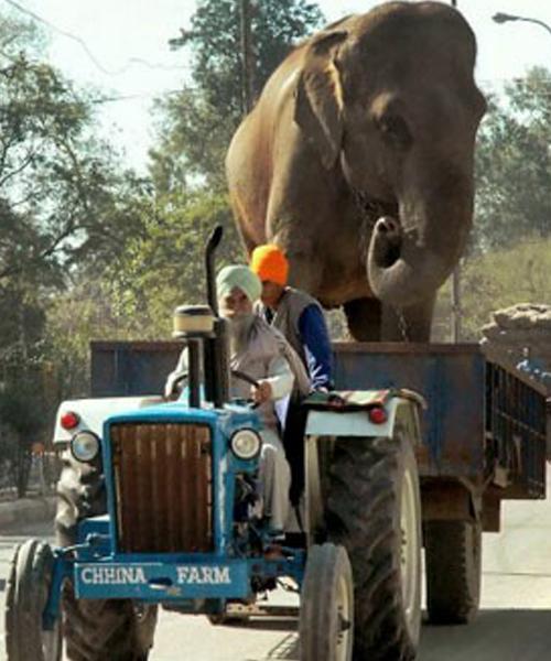 1451391430522 صور لن تراها سوى في الهند