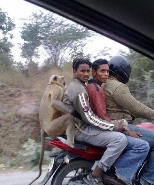 1451391430543 صور لن تراها سوى في الهند