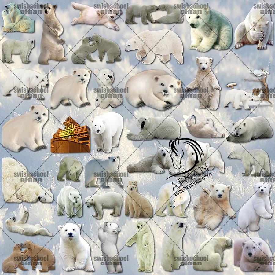 سكرابز الدب القطبي عالي الجوده للفوتوشوب png