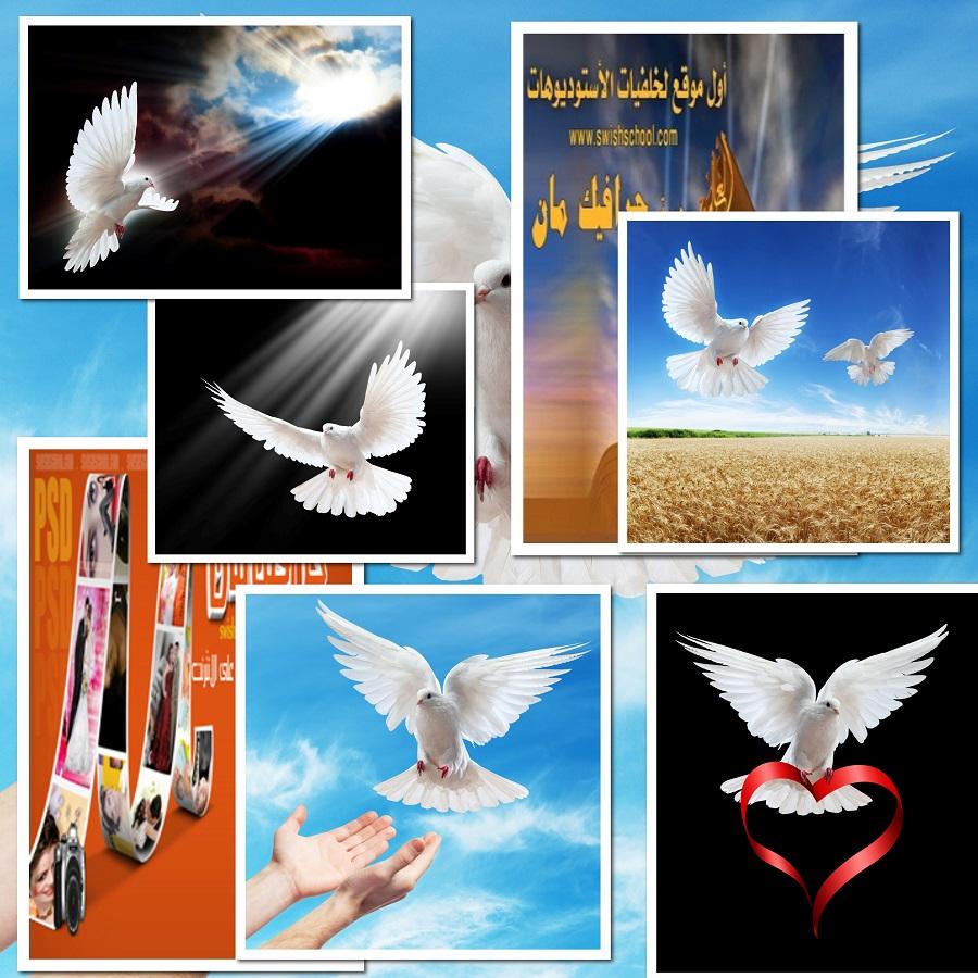 ستوك فوتو حمام ابيض طاير في السماء jpg - صور حمام السلام عاليه الجوده للتصميم