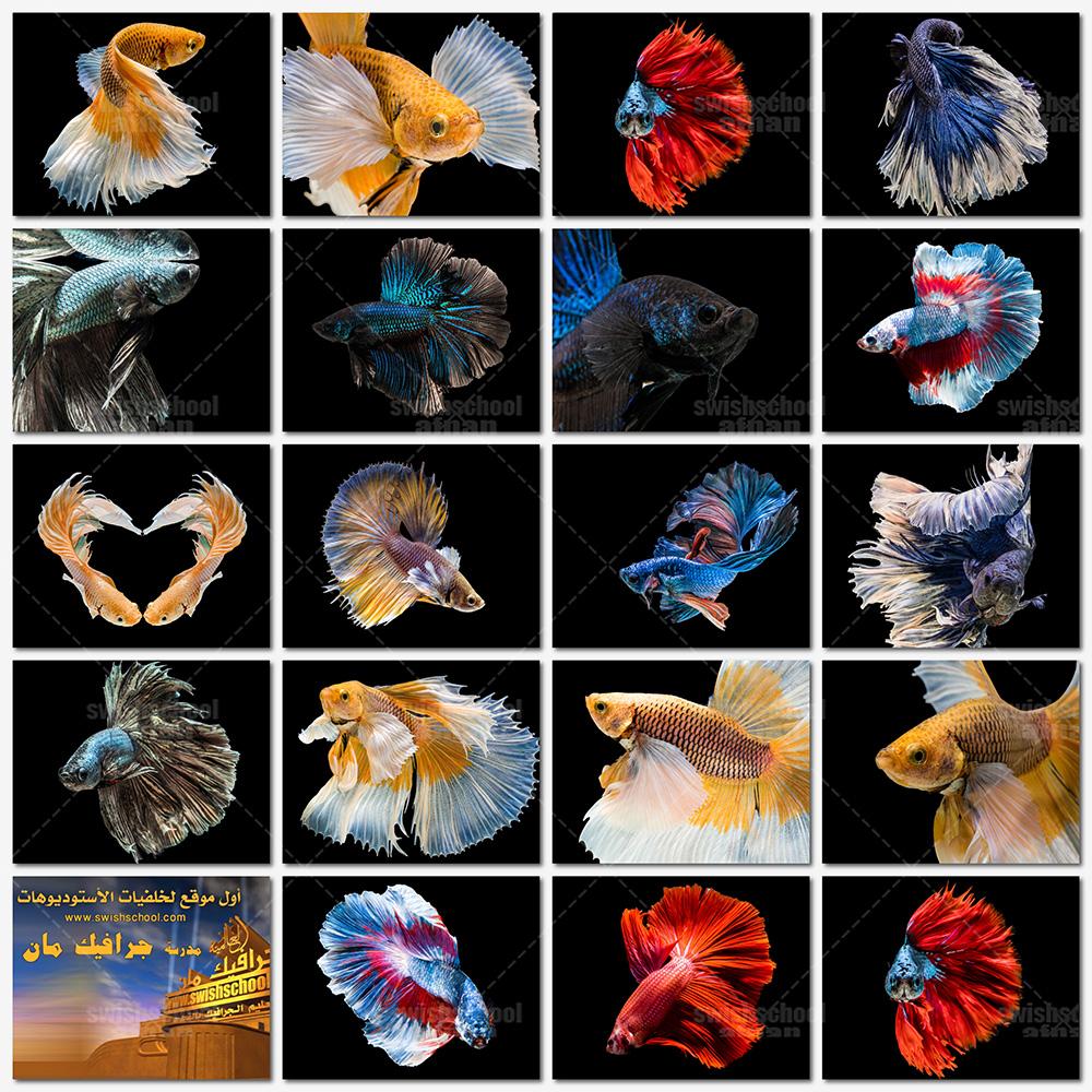 تحميل خلفيات اسماك , حيتان , دلافين , شعب مرجانيه عاليه الجوده للفوتوشوب jpg