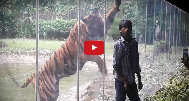 فيديو : اخطر هجمات من حيوانات مفترسه على البشر 2017