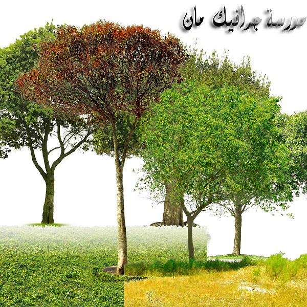 سكرابز أشجار png