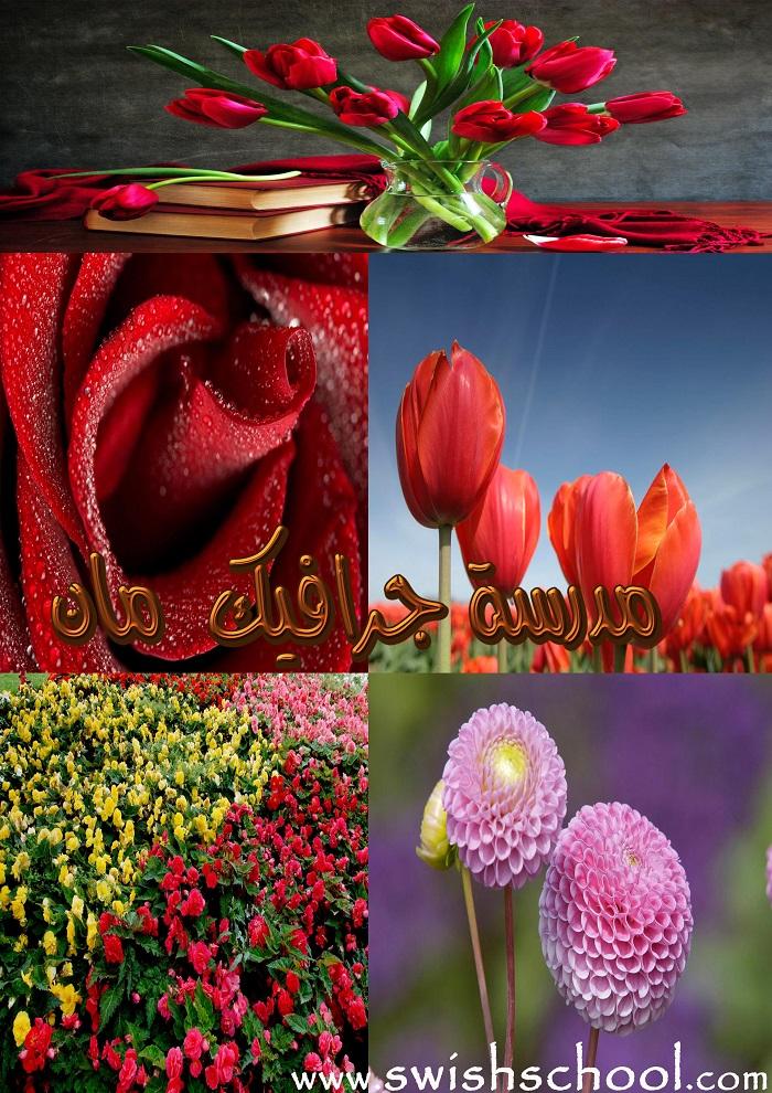 خلفيات زهور عالية الجودة ومتععدة الاحجام jpg