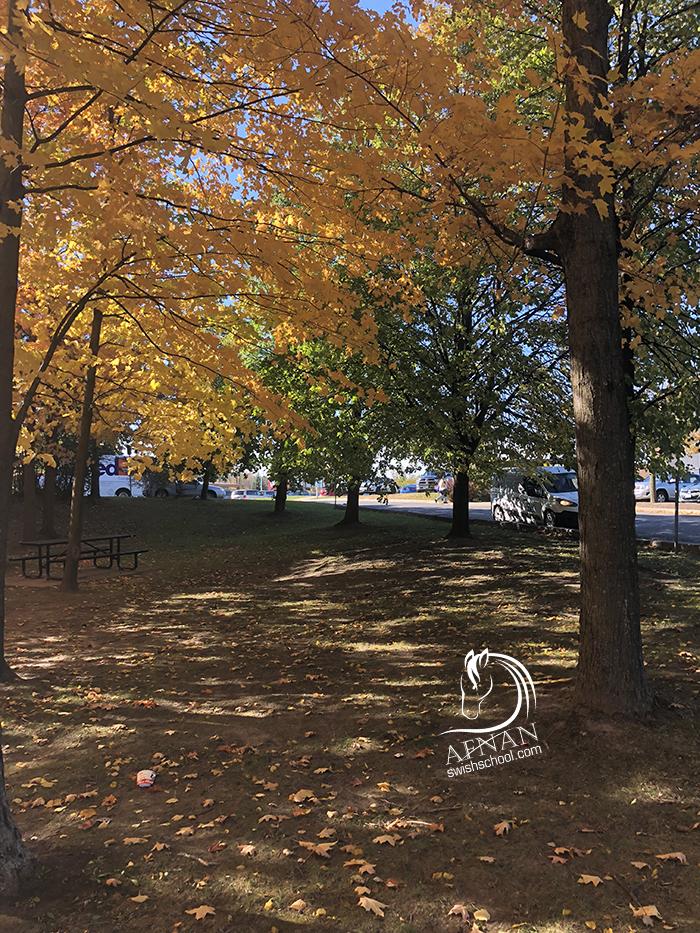 لقطات من فصل الخريف الذهبي في كندا تصوير افنان
