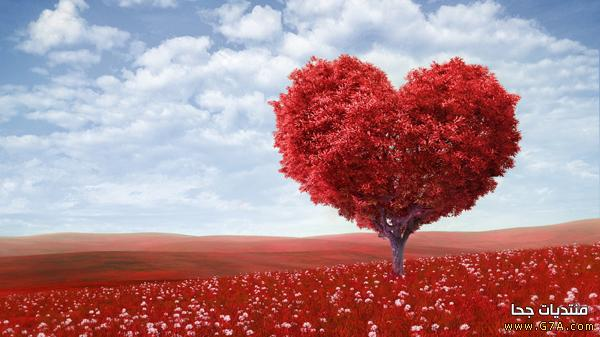 صور حب 22 صور حب ، صور حب رومانسيه ، اقوى صور عشق و غرام Love images