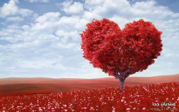 صور عشق 16 صور حب ، صور حب رومانسيه ، اقوى صور عشق و غرام Love images