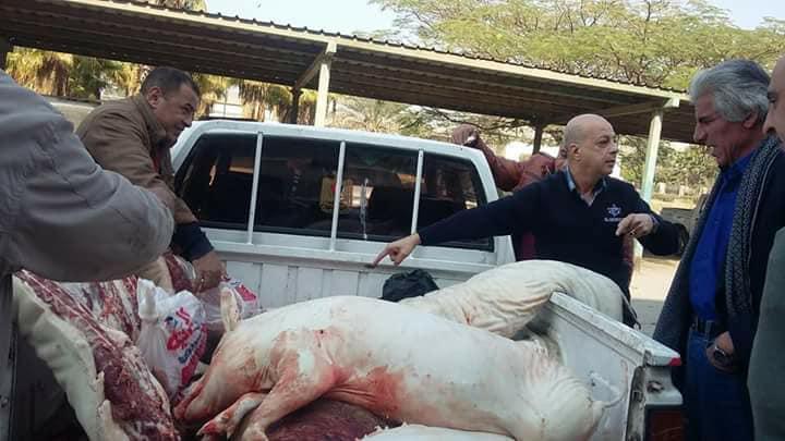 ذبح الخنازير وبيعها للمطاعم في القاهره 5 ذبح الخنازير وبيعها للمطاعم في القاهره