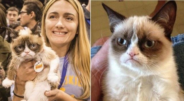 القط الغضبان كيف اصبح شكل اشهر الميمز على الفيس بوك
