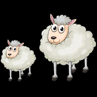 خروف العيد 7 صور خروف العيد الكبير