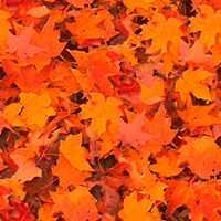 Nature Autumn3 Textures تكتشر خامات للفوتوشوب والثري دي الجزء الثالث