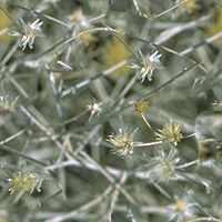 Nature DryGrass Textures تكتشر خامات للفوتوشوب والثري دي الجزء الثالث