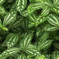 Nature Leaves2 Textures تكتشر خامات للفوتوشوب والثري دي الجزء الثالث