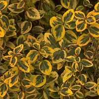 Nature Leaves5 Textures تكتشر خامات للفوتوشوب والثري دي الجزء الثالث
