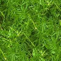 Nature Pine Textures تكتشر خامات للفوتوشوب والثري دي الجزء الثالث
