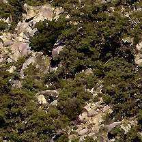Nature STrees Textures تكتشر خامات للفوتوشوب والثري دي الجزء الثالث