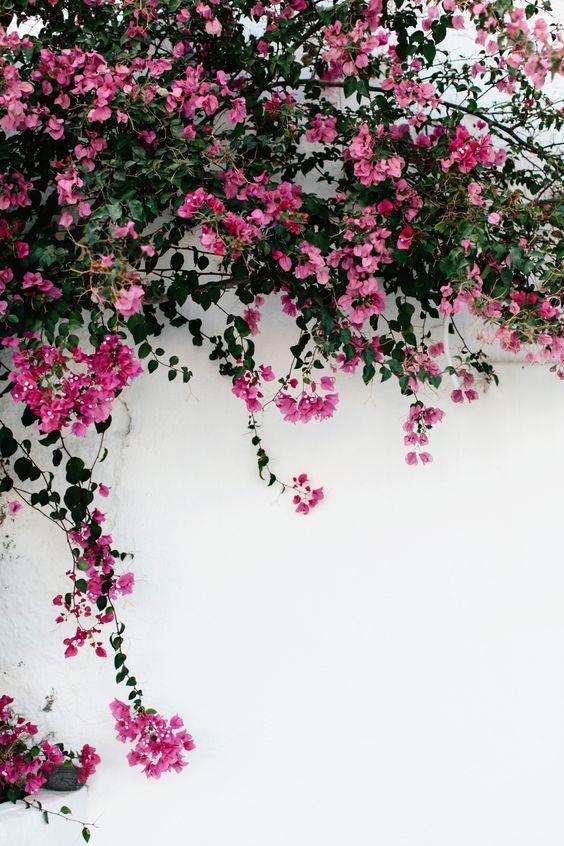 خلفيات جوال زهور 14 خلفيات جوال   ورد وازهار