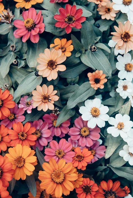 خلفيات جوال زهور 2 خلفيات جوال   ورد وازهار