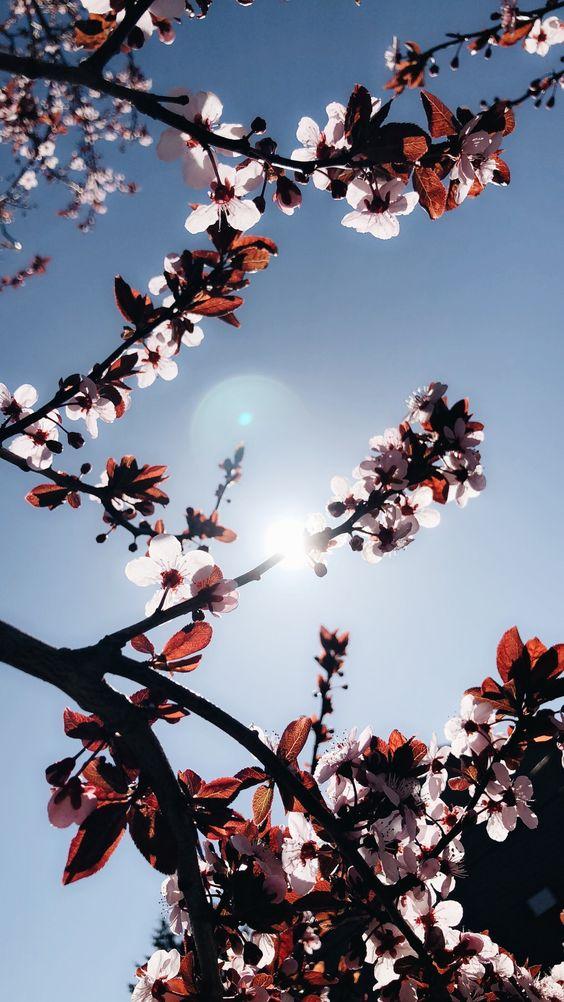 خلفيات جوال زهور 6 خلفيات جوال   ورد وازهار