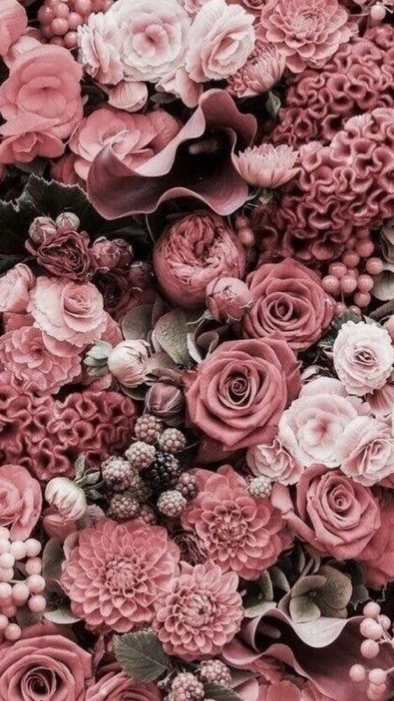 خلفيات جوال زهور 8 خلفيات جوال   ورد وازهار