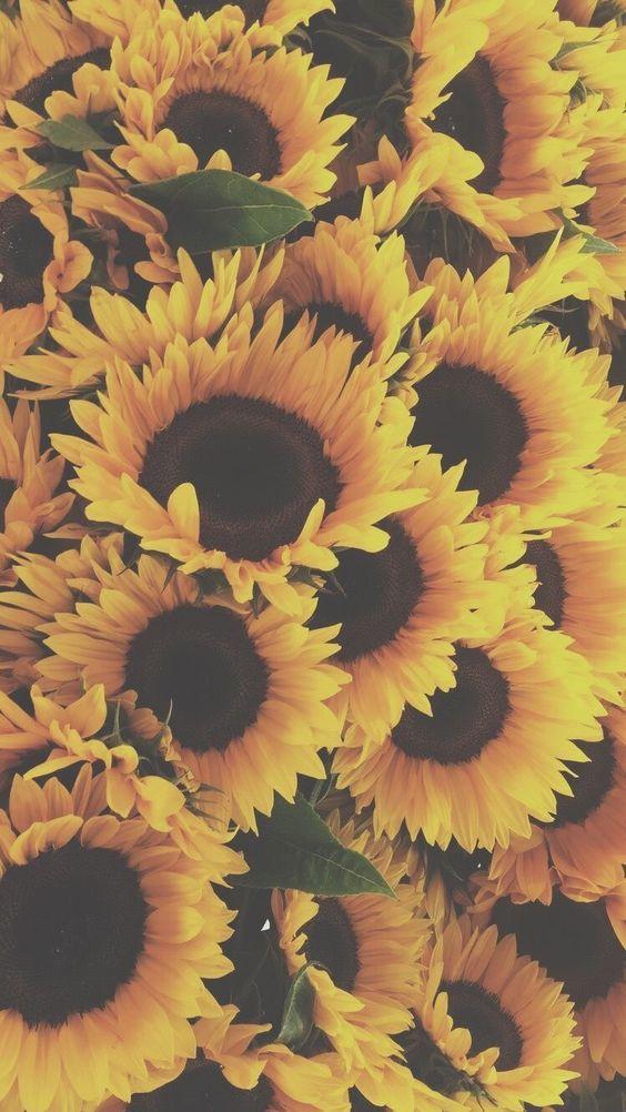 خلفيات جوال زهور 9 خلفيات جوال   ورد وازهار