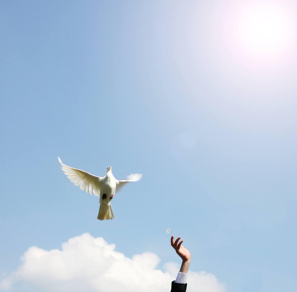 صور حمام ابيض يرفرف في السماء 10 صور حمامه السلام