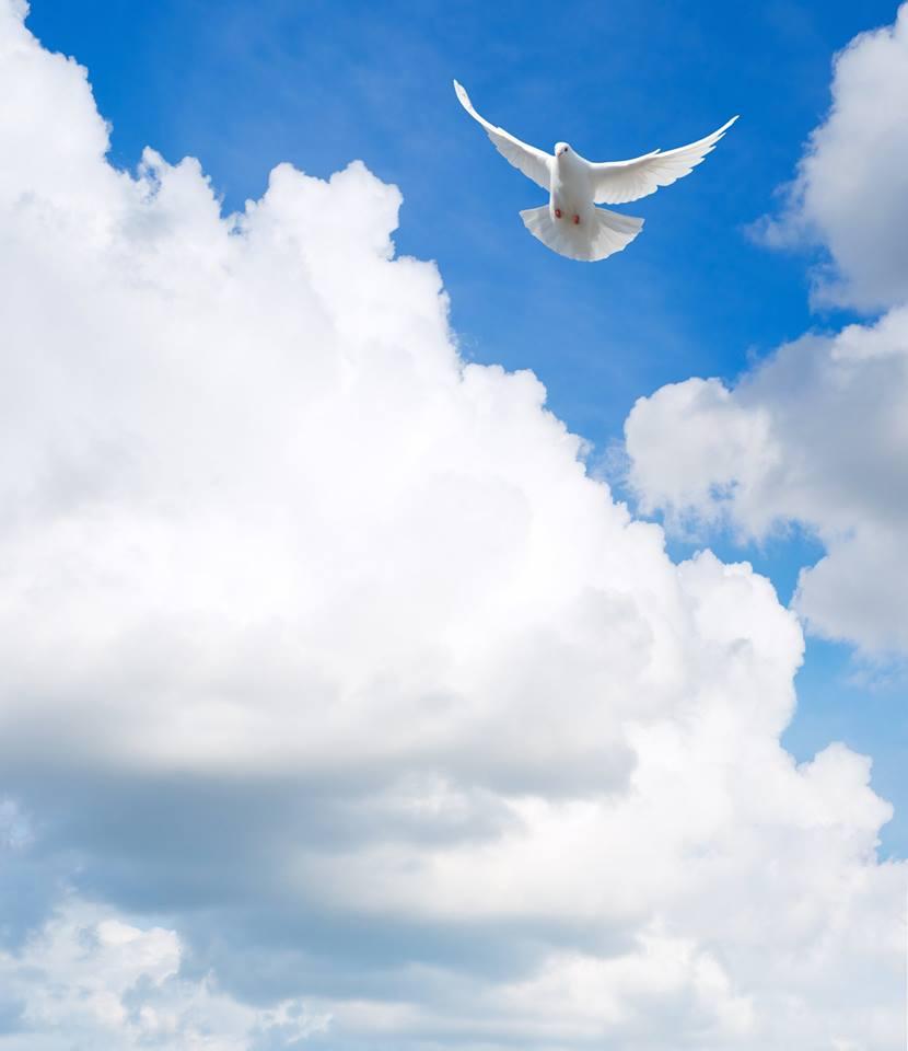 صور حمام ابيض يرفرف في السماء 12 صور حمامه السلام