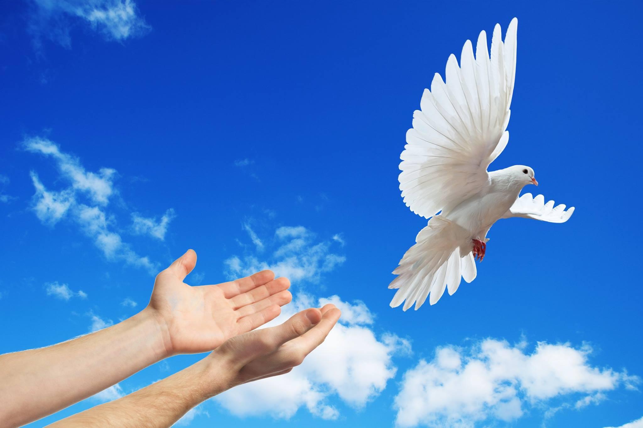 صور حمام ابيض يرفرف في السماء 13 صور حمامه السلام