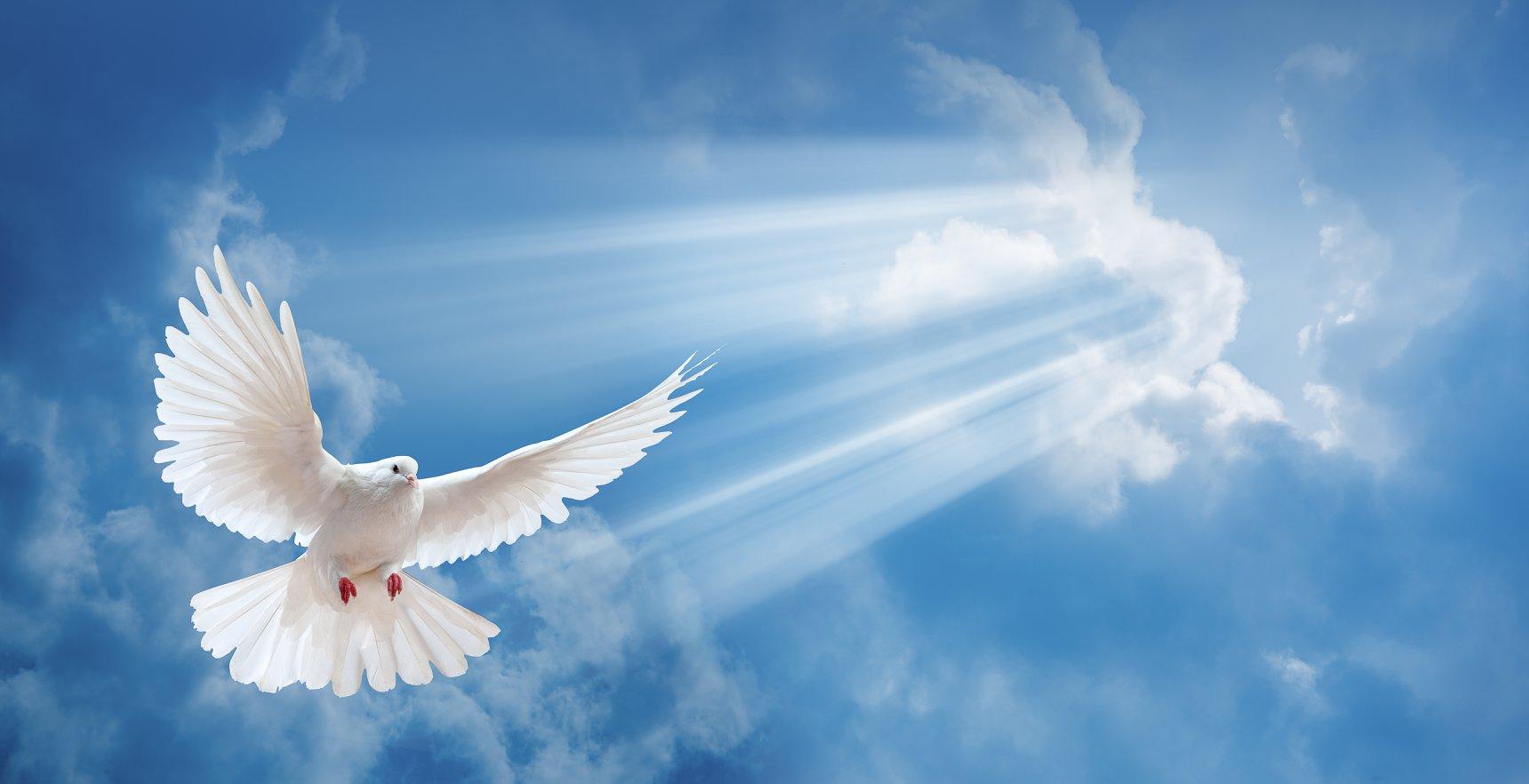 صور حمام ابيض يرفرف في السماء 14 صور حمامه السلام