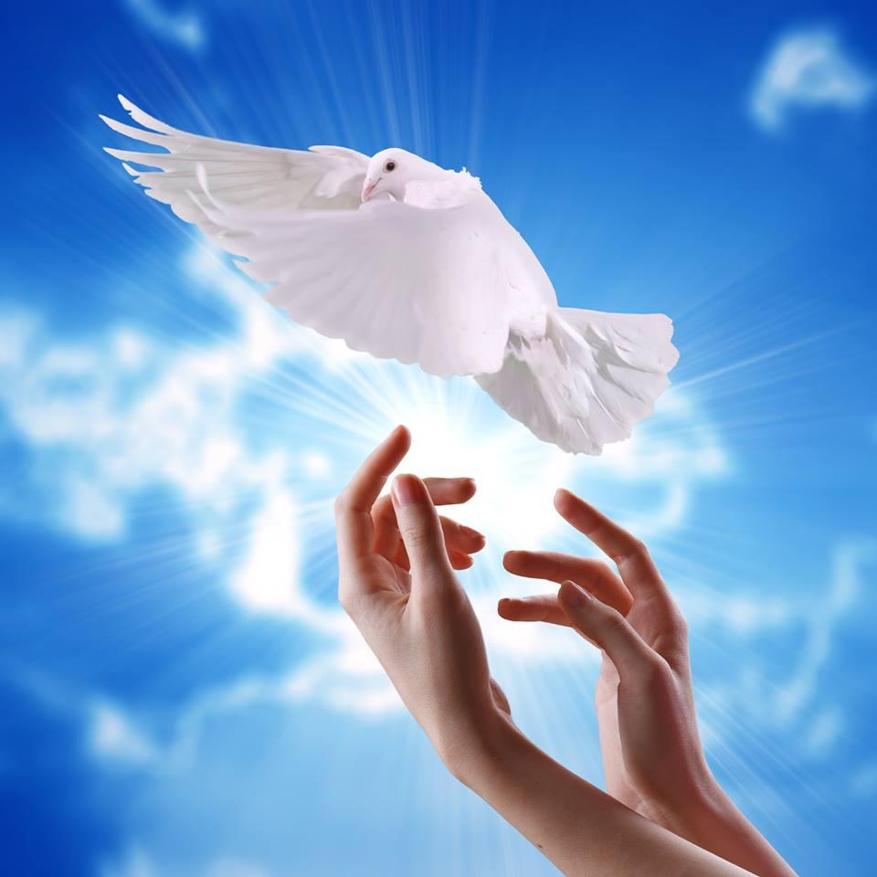 صور حمام ابيض يرفرف في السماء 19 صور حمامه السلام