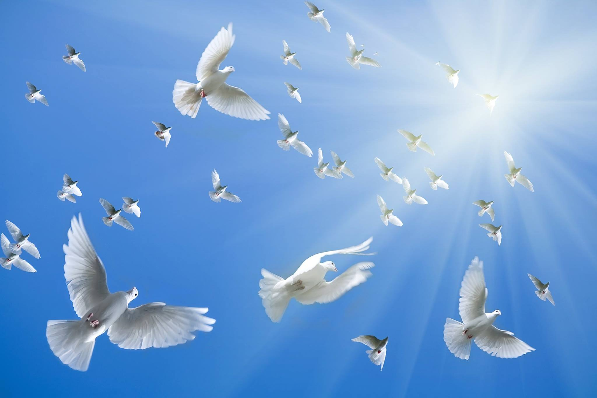 صور حمام ابيض يرفرف في السماء 2 صور حمامه السلام