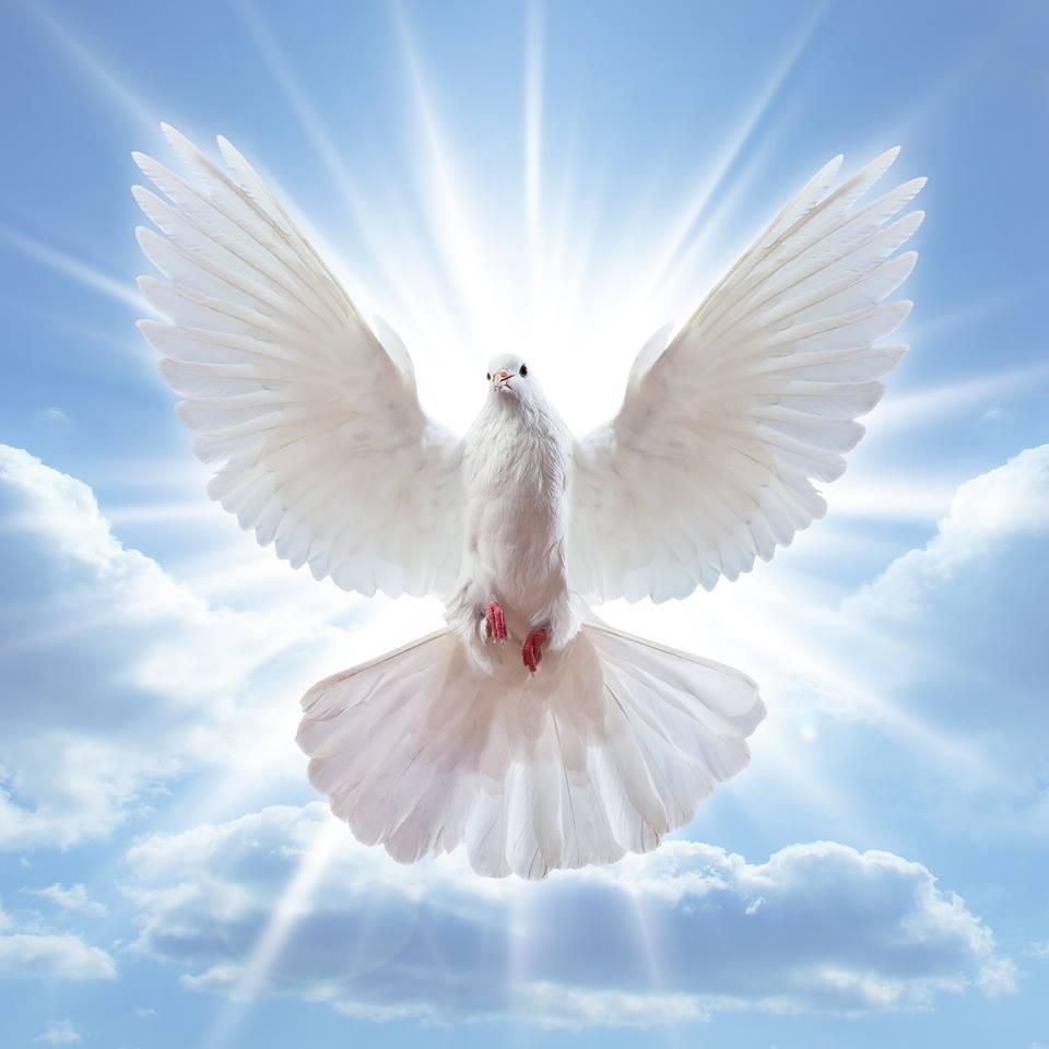صور حمام ابيض يرفرف في السماء 21 صور حمامه السلام