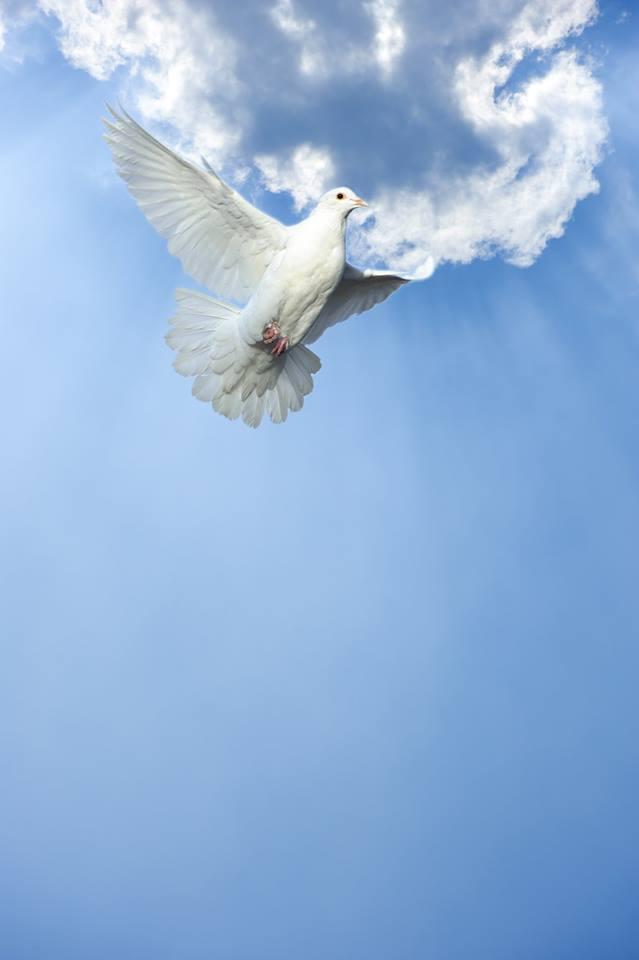 صور حمام ابيض يرفرف في السماء 22 صور حمامه السلام