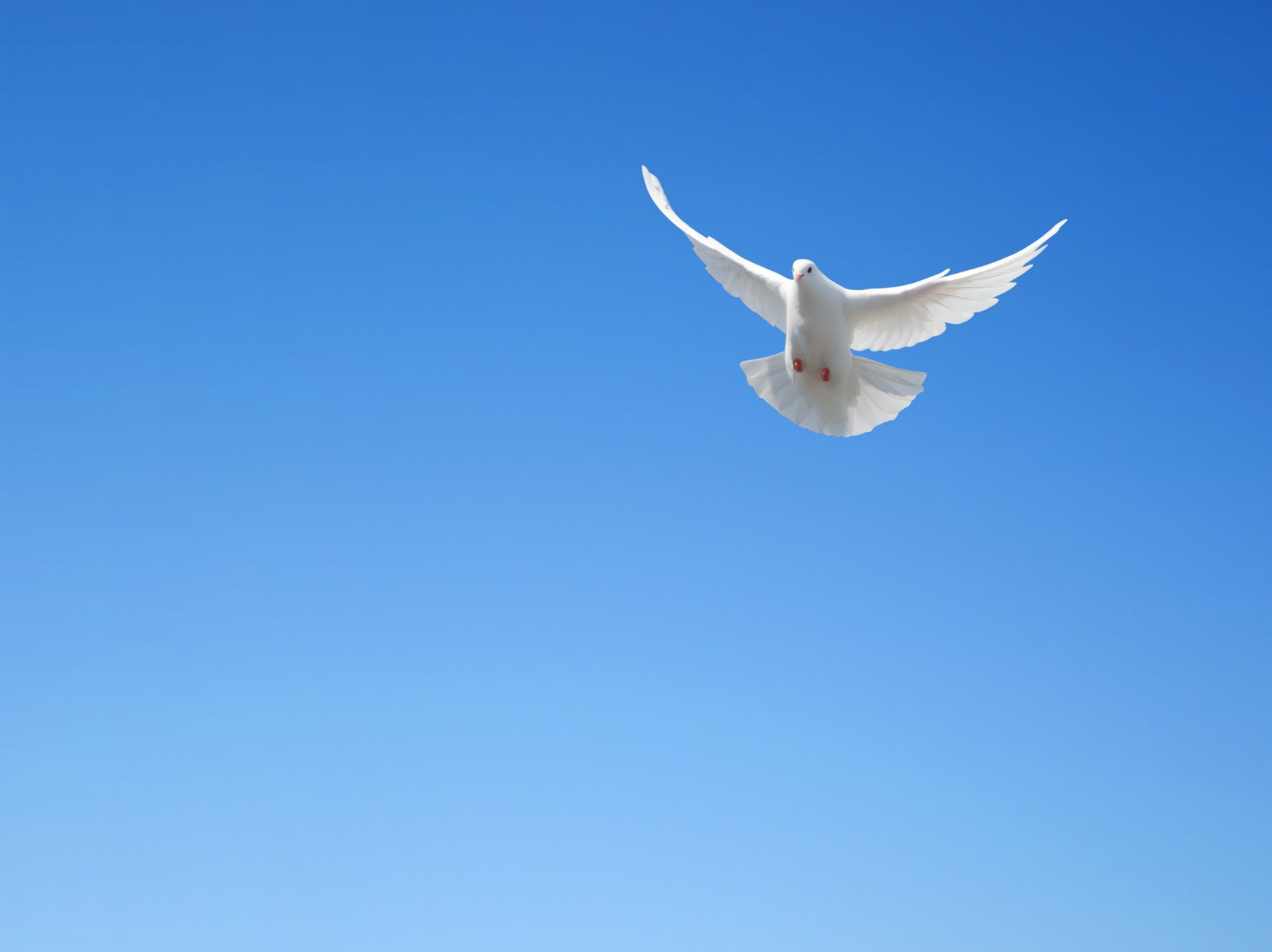 صور حمام ابيض يرفرف في السماء 3 صور حمامه السلام