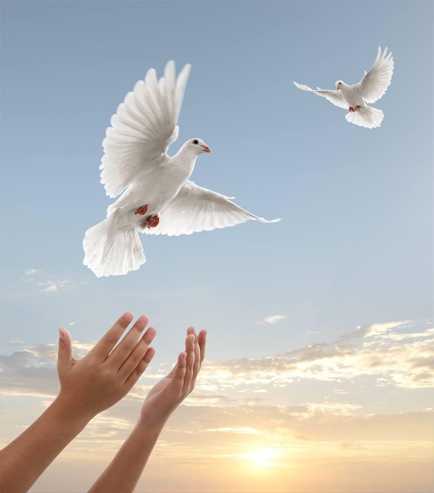 صور حمام ابيض يرفرف في السماء 4 صور حمامه السلام