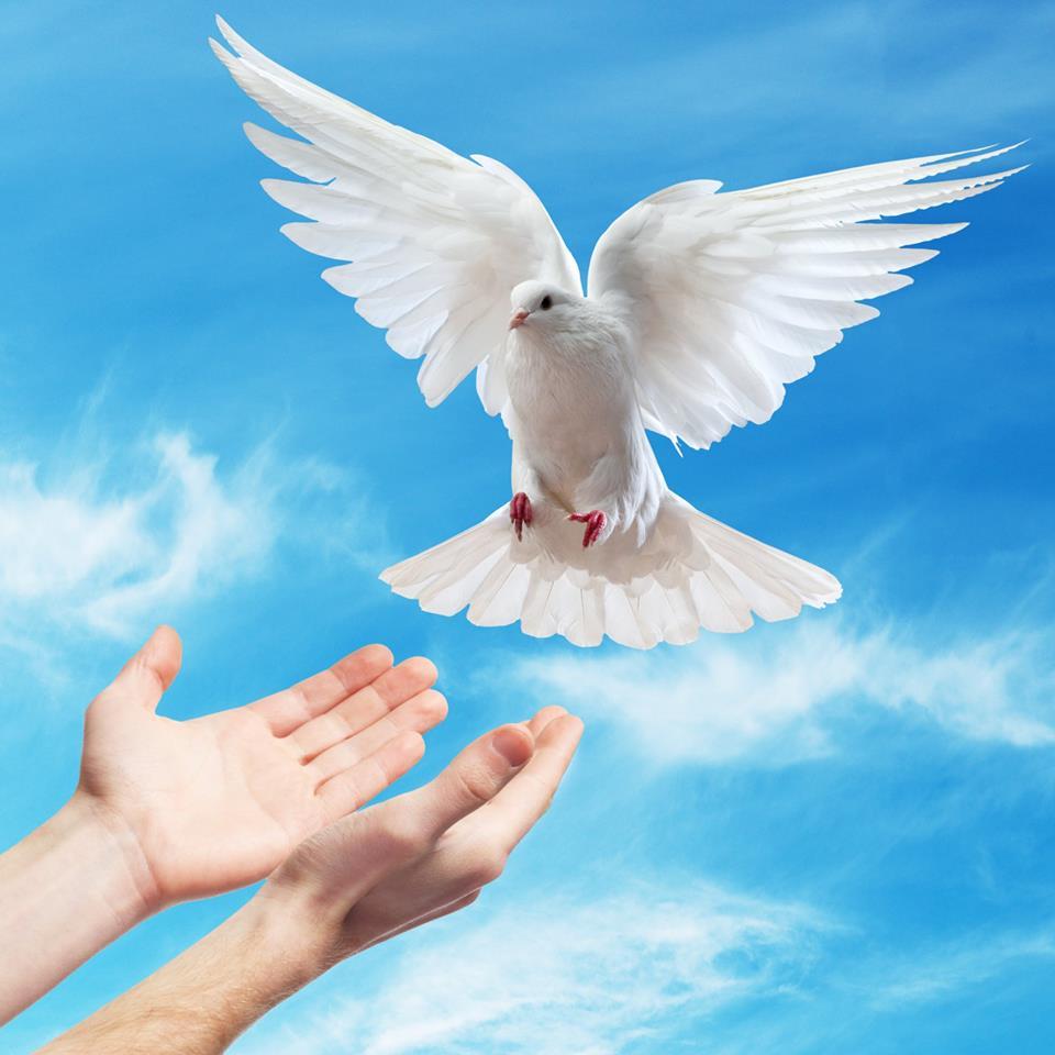 صور حمام ابيض يرفرف في السماء 6 صور حمامه السلام