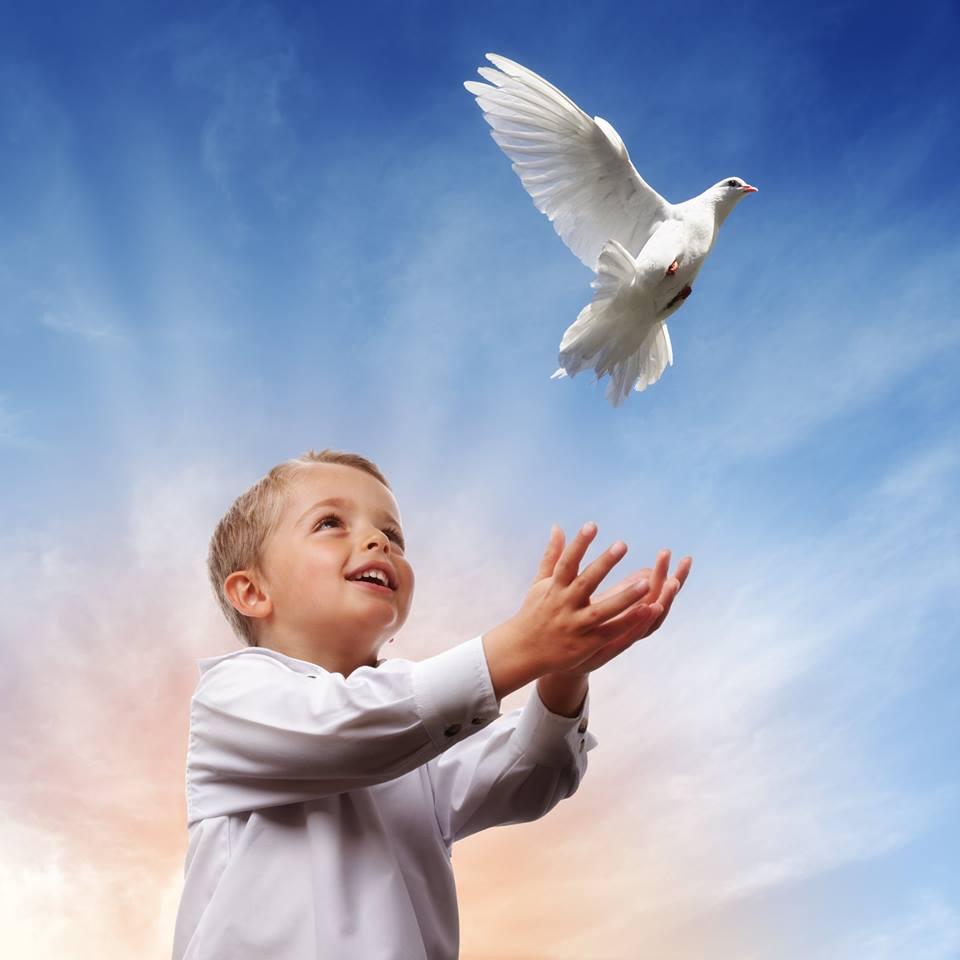 صور حمام ابيض يرفرف في السماء 8 صور حمامه السلام