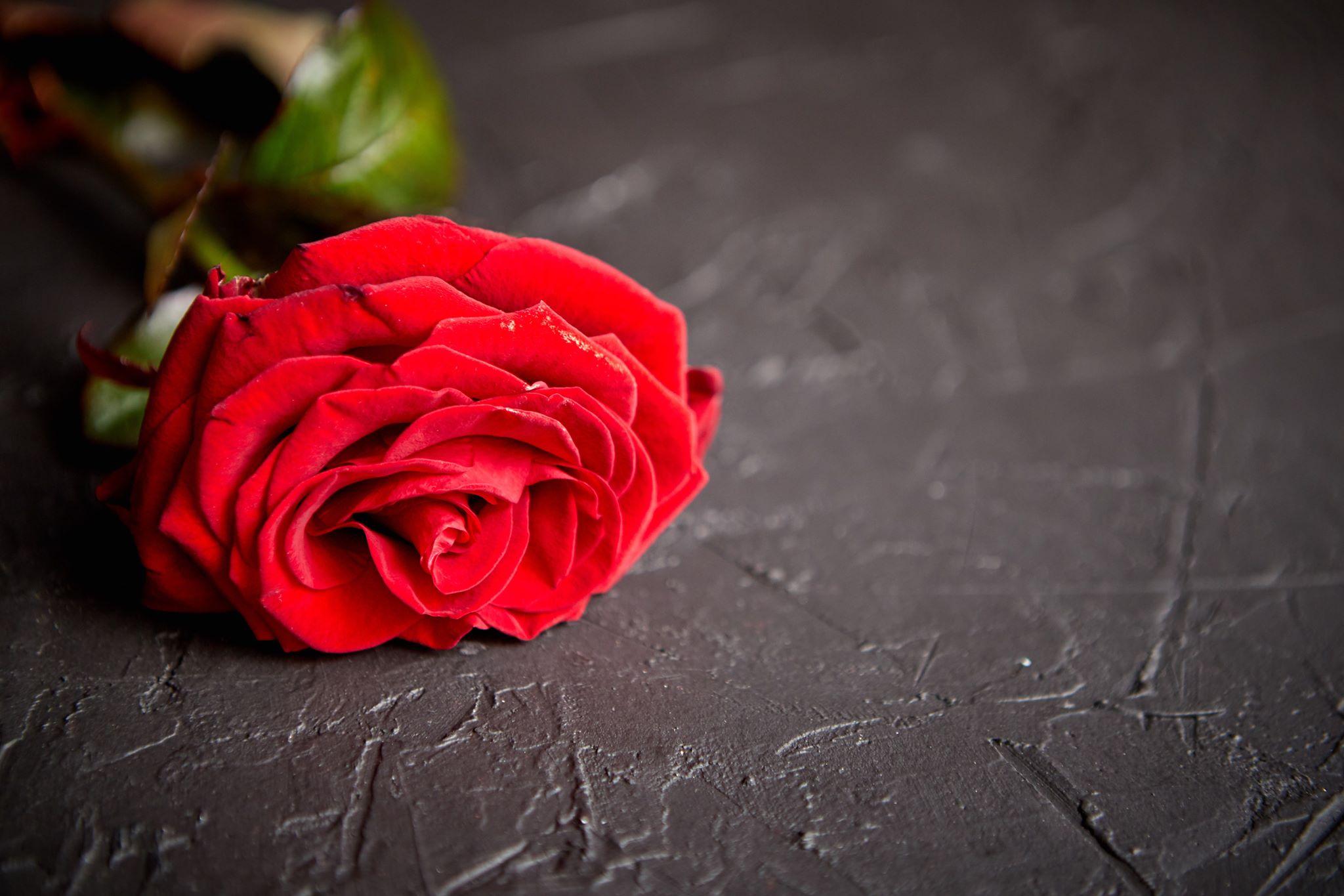Valentines day images 23 صور عيد الحب