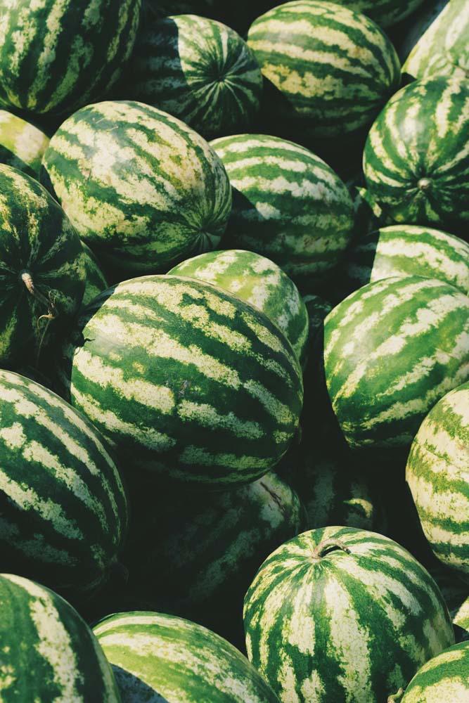 صور بطيخ 4 صور البطيخ