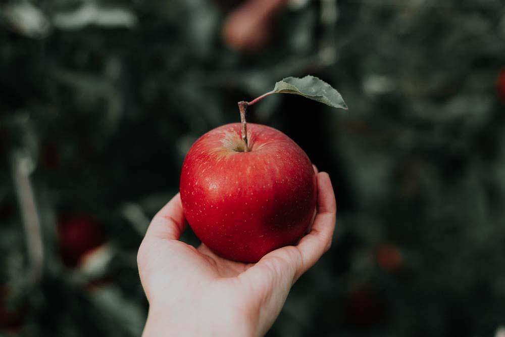 صور تفاح 15 صور التفاح